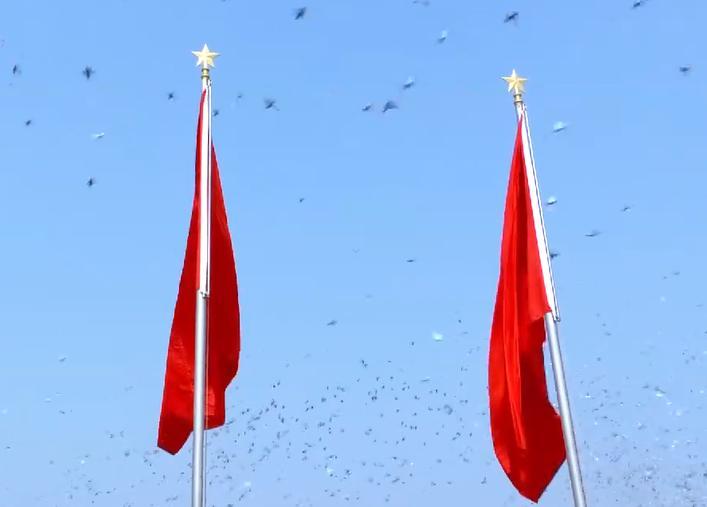高清视频:国庆节7万只和平鸽展翅高飞