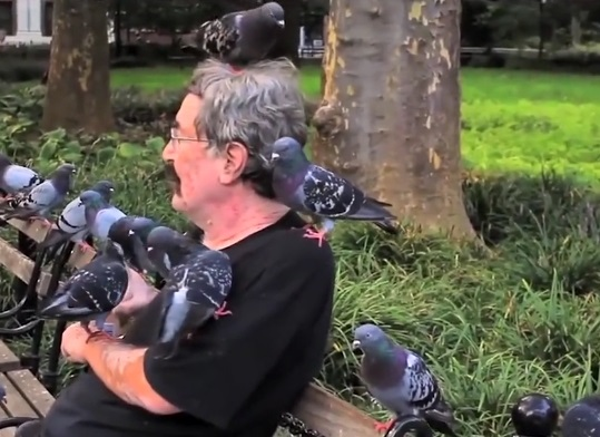 达尔文差点写了一本《鸽子起源》?