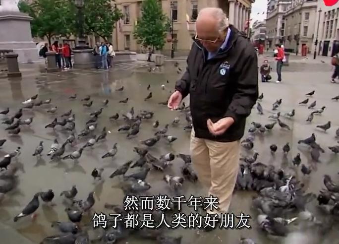 动物天才鸽子:自然界最成功的生物