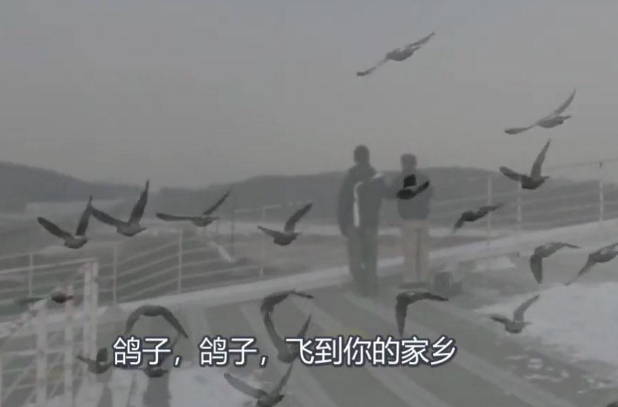 韩国鸽友父子俩养鸽70年 以鸽寄思乡情