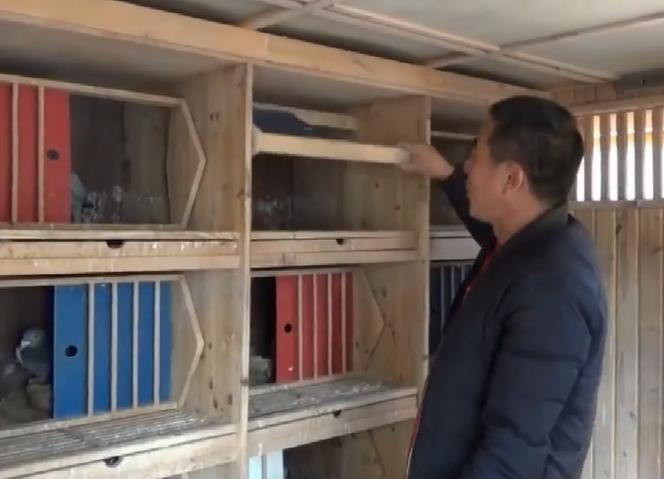 锦州名家哲学文鸽舍 精心设计的巢箱