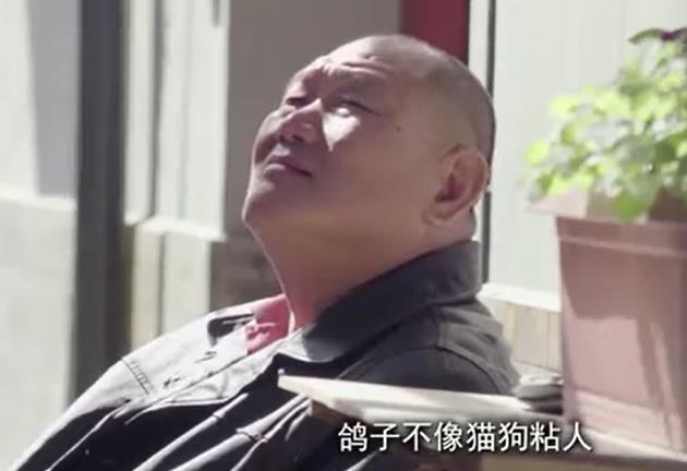 北京二环胡同里的鸽子铲屎官
