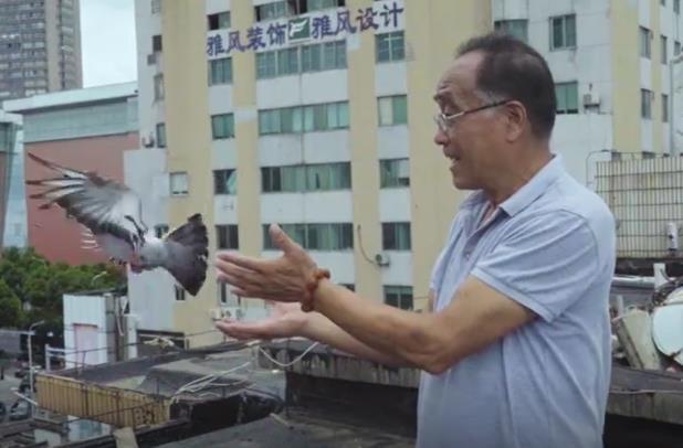 纪录片:天台上的养鸽人