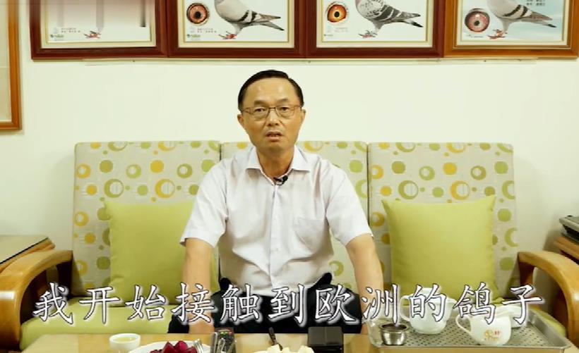 探秘台湾赖铭�舾肷峒捌涑�级种鸽(1)