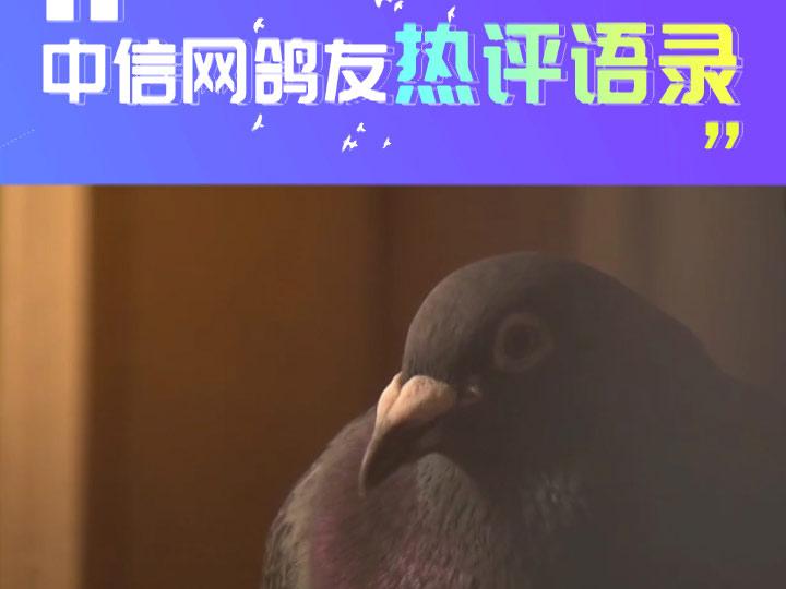 家飞重不重要 养鸽用不用药?