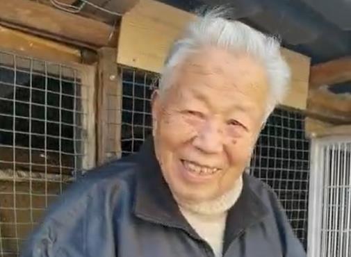 94岁老爷爷:今年要出百羽鸽子选送公棚