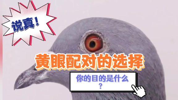 鸽眼配对如同照药抓方 讲讲黄眼配对