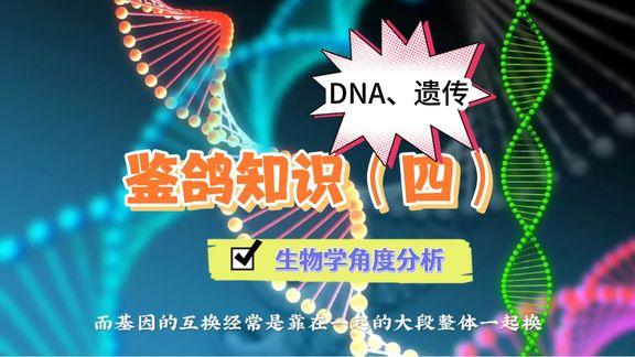 从生物学分析冠军基因有多少能遗传给后代?
