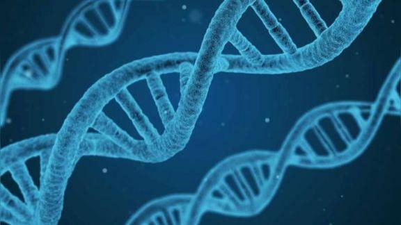 遗传的不确定性才是作育的乐趣