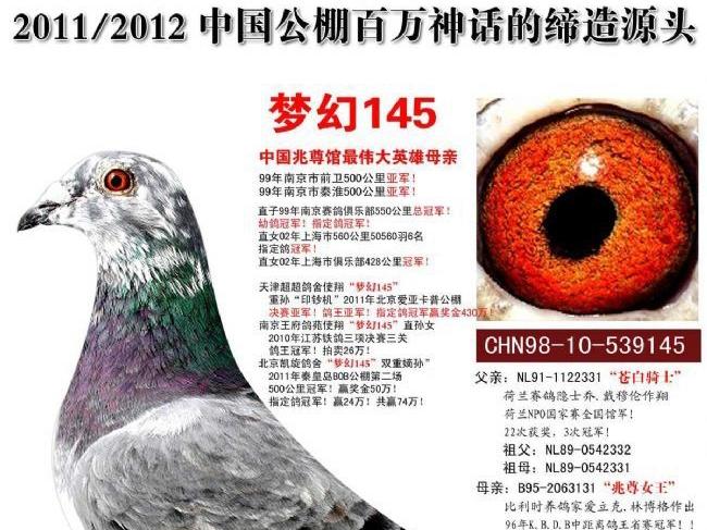 """每日一鸽:缔造百万神话的""""梦幻145"""""""
