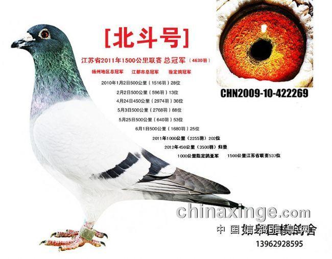 """每日一鸽:中国制造""""北斗号"""""""