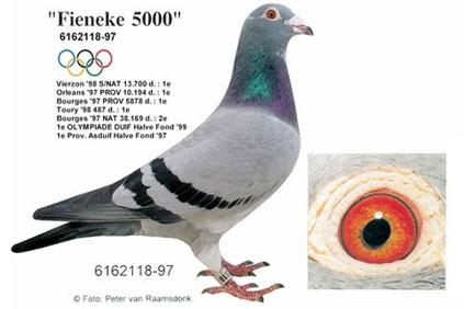 """90年代神奇小鸟""""芬妮卡5000"""""""